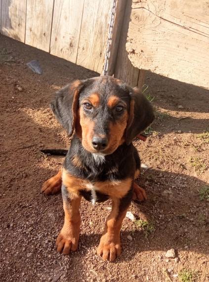 Lapi as puppy